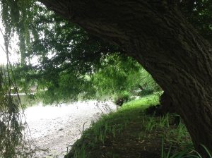 There is a willow grows aslant a brook…